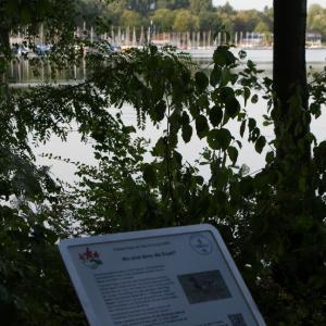 """Informationstafel 10: """"Wo sind denn die Erpel?"""": Tiere im und am See"""